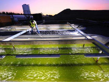 Des microalgues comme biocarburant, l'algocarburant a de belles perspectives de croissance !
